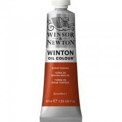 Oleo Winton Winsor & Newton 37 ml Siena Tostada (074)